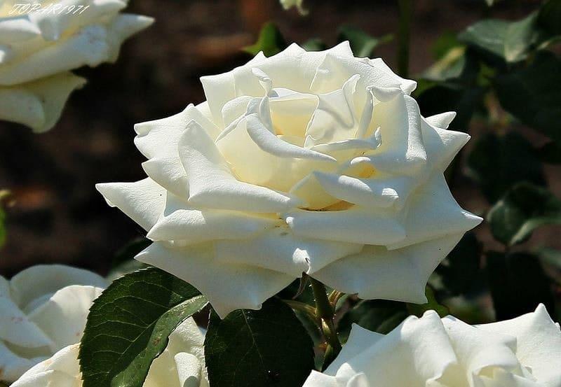 Фловеред  доставка цветов в Уфе СКИДКА 57 на розы