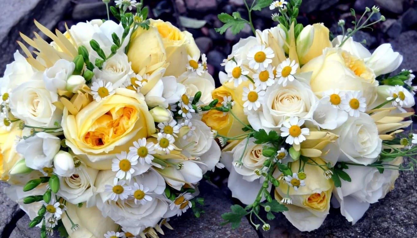 Фото цветы букет роз