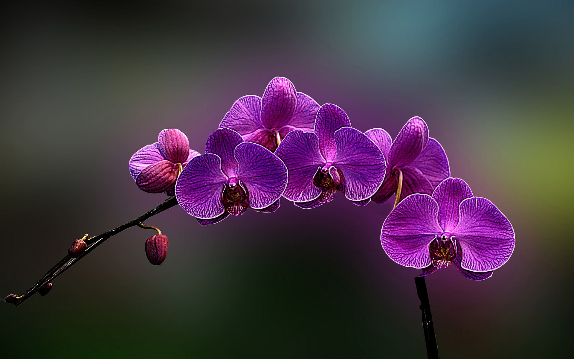 Орхидеи фото | 50 красивых фото