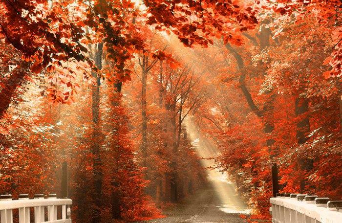золотая осень фото - 05