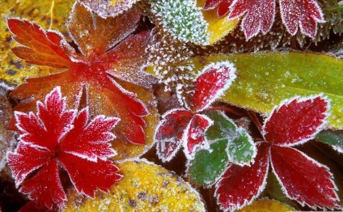 золотая осень фото - 06